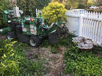 front garden tree stump removal
